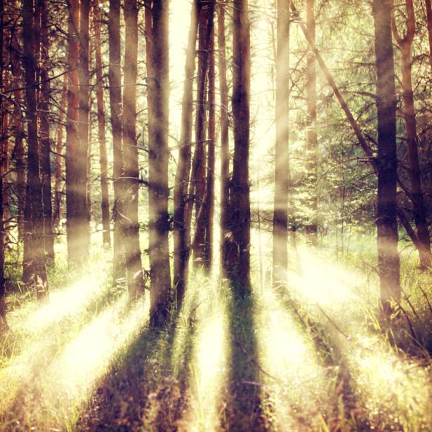 Фотошторы солнечные лучи в лесу (bedroom-curtain-00010)