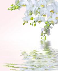 flowers-0000050