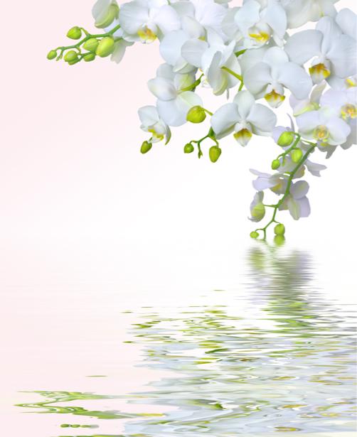 Белая орхидея фотообои цветов на стену (flowers-0000050)