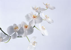 flowers-0000055