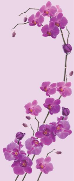 Фотообои на стену - Лиловые орхидеи (flowers-0000204)