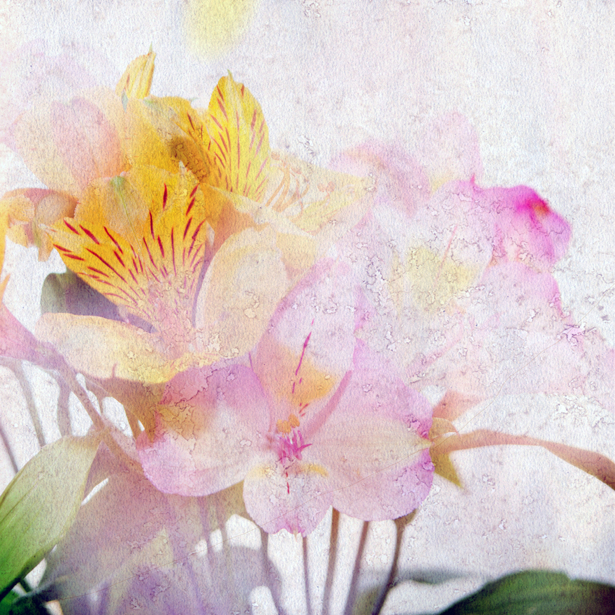 Обои фото Фоновый букет цветов (flowers-0000328)