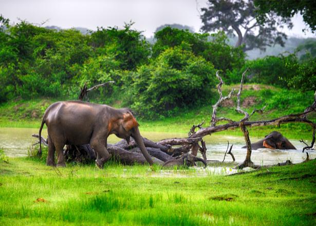 Фотообои слоны саванна (nature-0000649)