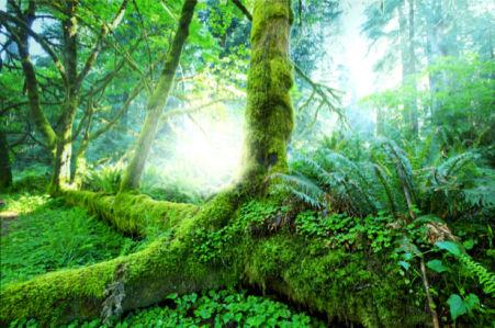 Фотообои лес чаща зеленый (nature-0000696)