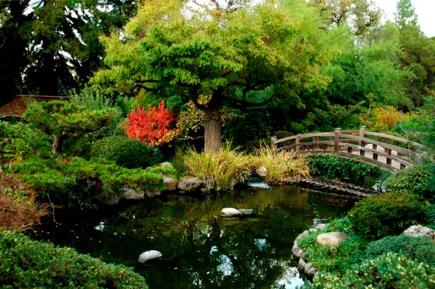 Фотообои с природой японский сад (nature-00057)