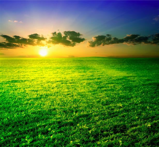 Фотообои пейзаж поле закат (nature-00239)