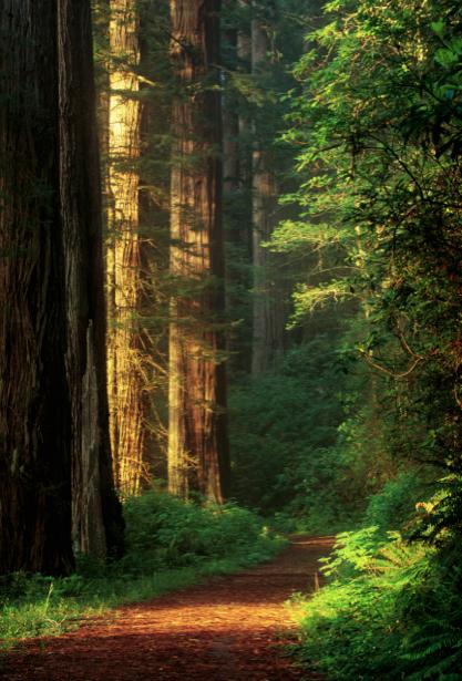 Фотообои вертикальные дорога лес (nature-00257)
