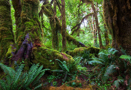 Фотообои Тропический лес (nature-879)