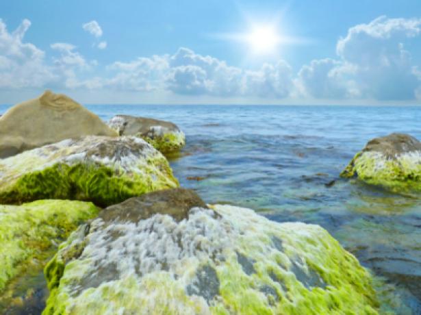 Фотообои море водоросли на камне (sea-0000033)