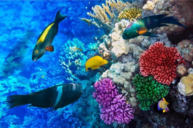 Фотообои кораллы 3д рыбки море (underwater-world-00034)