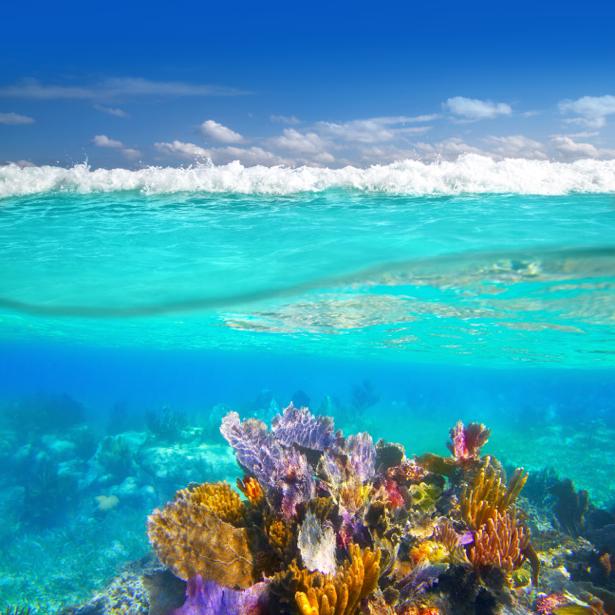 Фотообои для ванны кораллы фото (underwater-world-00175)
