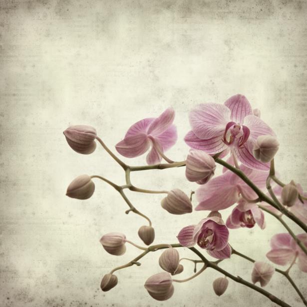 Цветущая орхидея Фотообои на стену цветы (flowers-0000043)