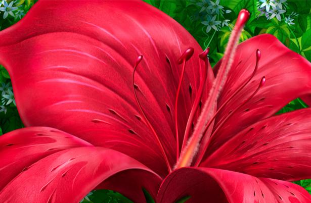 Обои фото Красная лилия (flowers-0000124)