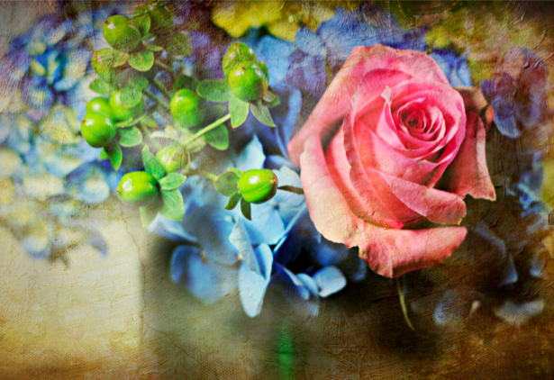 Роза - Фотообои на стену (flowers-0000214)