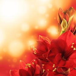 flowers-0000394