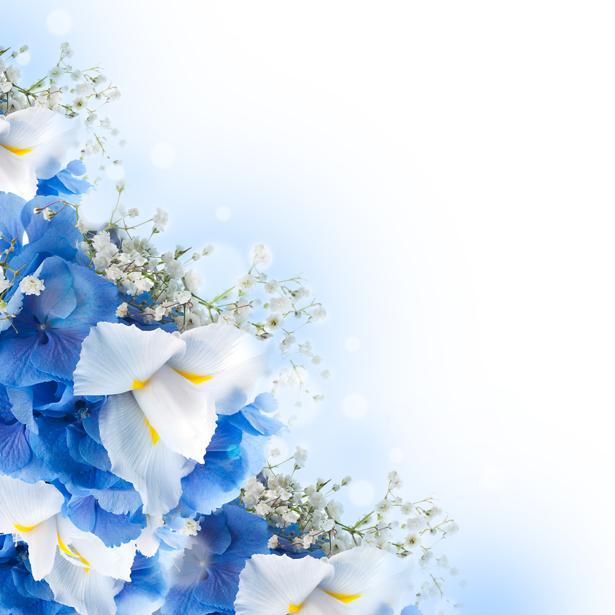Цветочные фото обои Ирисы (flowers-0000439)