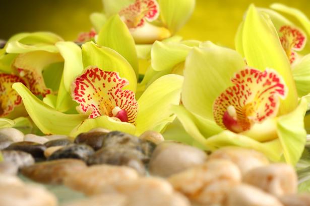 Обои фото желтые орхидеи (flowers-0000554)