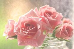 flowers-758