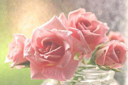 Фотообои розы на рассвете (flowers-758)