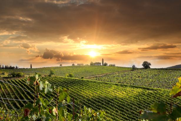Фотообои закат виноградник (nature-0000631)