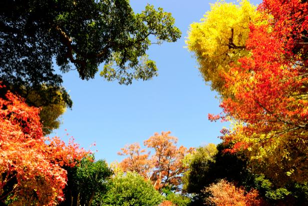 Фотообои с природой лес деревья снизу (nature-00141)