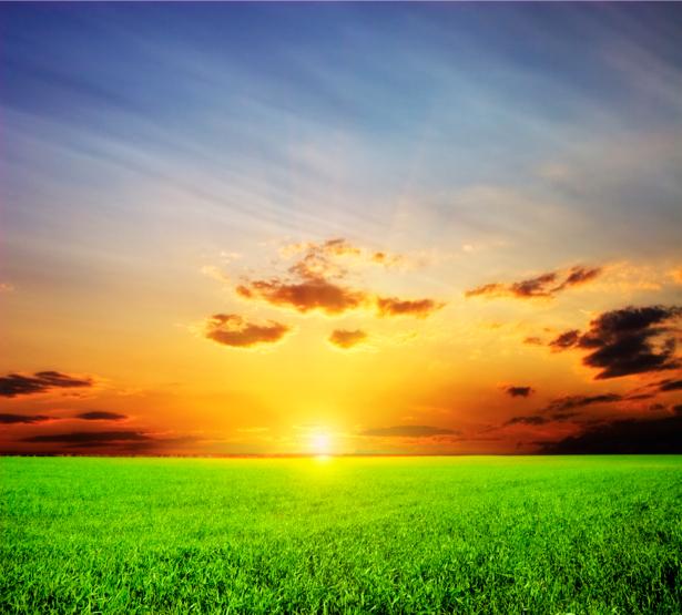 Фотообои поле закат пейзаж (nature-00238)