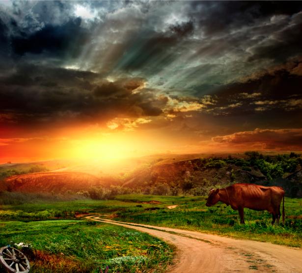 Фотообои фото дороги и поле закат (nature-00307)