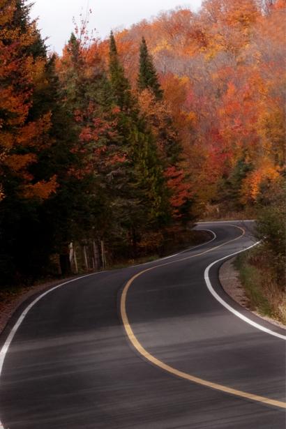 Фотообои осенняя дорога лес (nature-00519)
