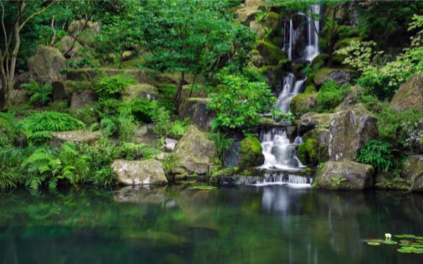 Фотообои горный водопад в лесу (nature-00557)