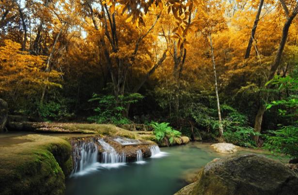 Фотообои осенний лес водопад (nature-00559)