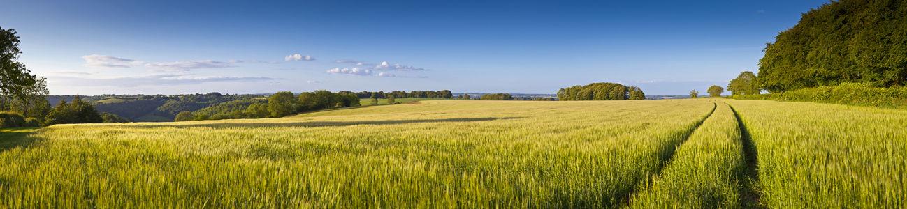 Фотообои поля и леса (panorama-47)
