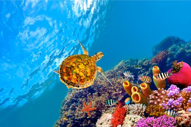 Фотообои кораллы черепаха океан (underwater-world-00007)