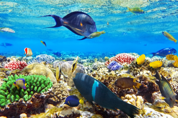 фотообои для ванной комнаты кораллы (underwater-world-00159)