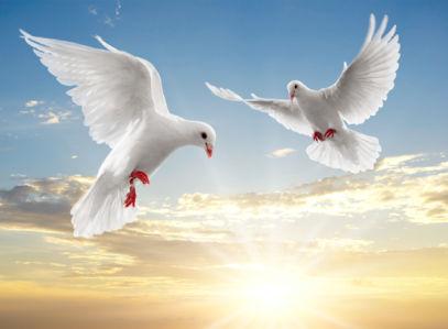 Фотообои голуби в небе закат (animals-0000011)