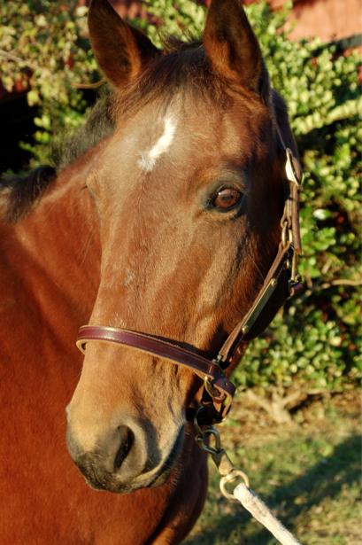 Фотообои конь лошадь взгляд (animals-0000099)