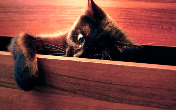 Фотообои кот шкода (animals-0000130)