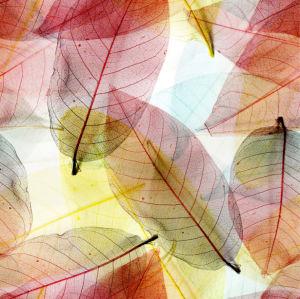 Фотошторы осенние листья (bedroom-curtain-00013)