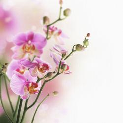 flowers-0000024