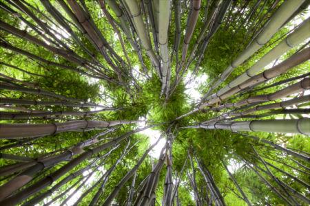 Бамбуковый лес - Обои на стену (flowers-0000250)