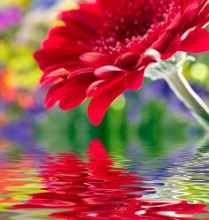flowers-0000318
