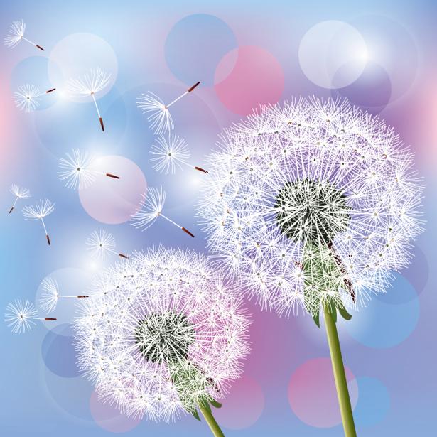 Фото обои обои на стену Одуванчик (flowers-0000605)