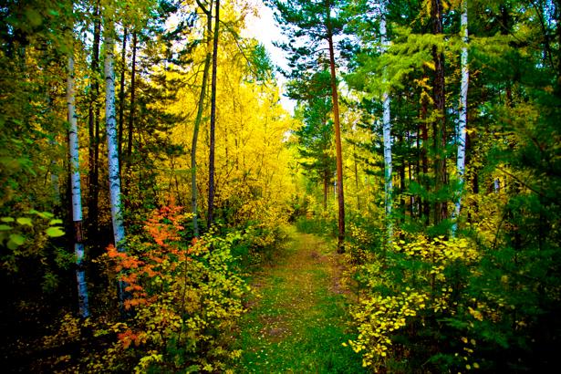 Фотообои с природой дорожка в лесу (nature-00085)