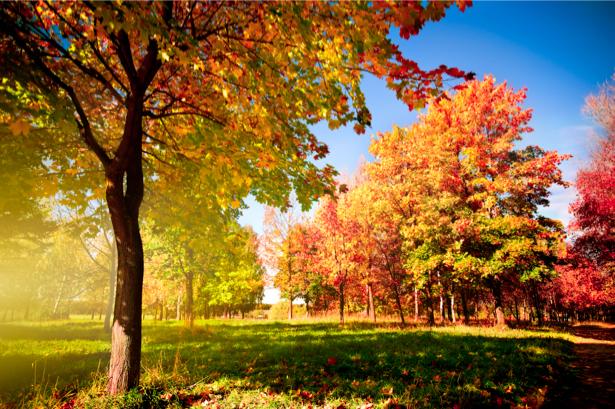 Фотообои с природой поле лес осень (nature-00115)