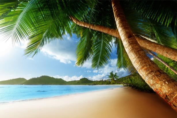 Фотообои в зал море берег пальмы (sea-0000175)