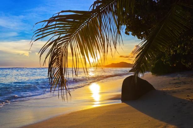 Фотообои море берег пальма (sea-0000283)