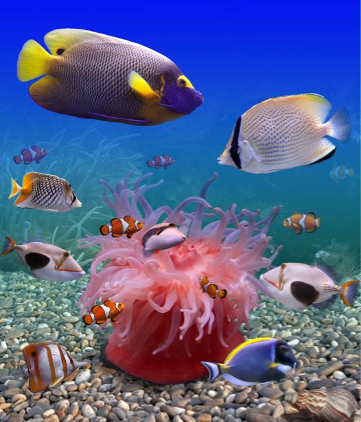 Фотообои 3д море рыбки (underwater-world-00057)
