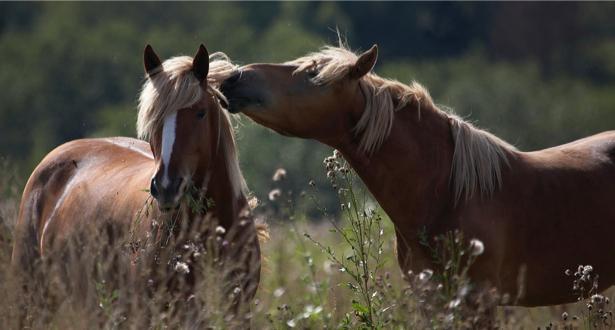 Фотообои лошади в поле беседа (animals-0000004)