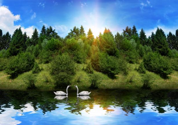 Фотообои лебеди в природе (animals-0000139)