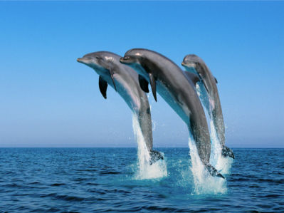 Фотообои дельфины море (animals-0000297)