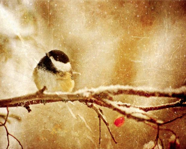 Фотообои зимняя птица холд (animals-0000314)